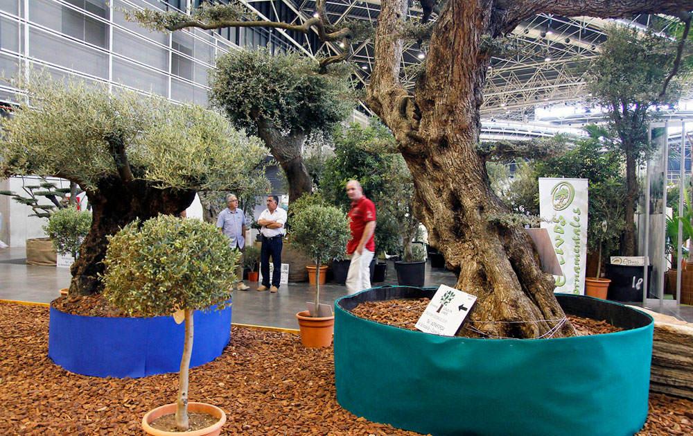 Exposición de olivos