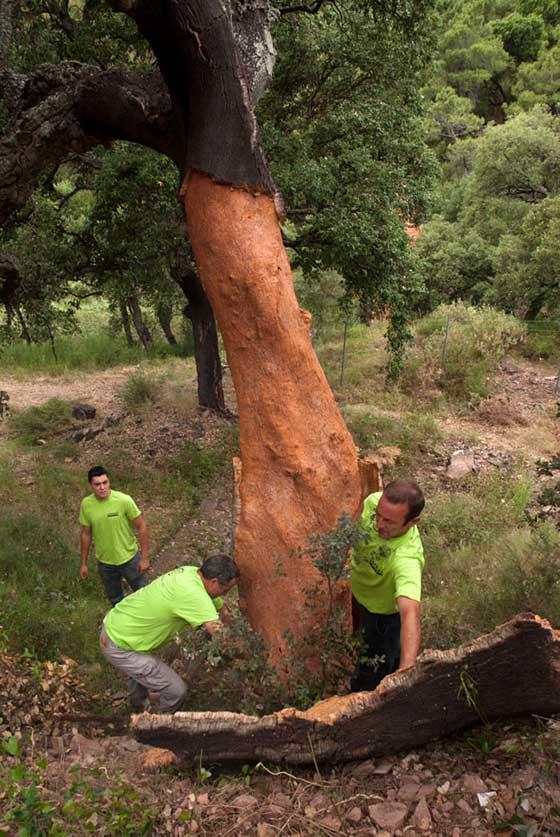 Extracción de corcho