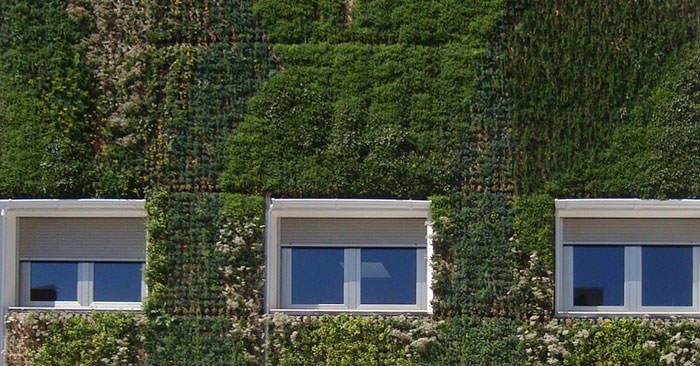 Plantas para cubiertas vegetales y regeneración de espacios