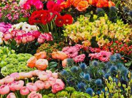 Flower & Garden Attraction
