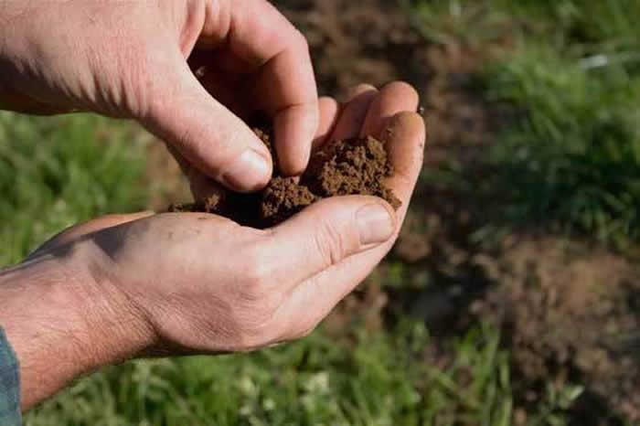 fertilización de plantas hortícolas