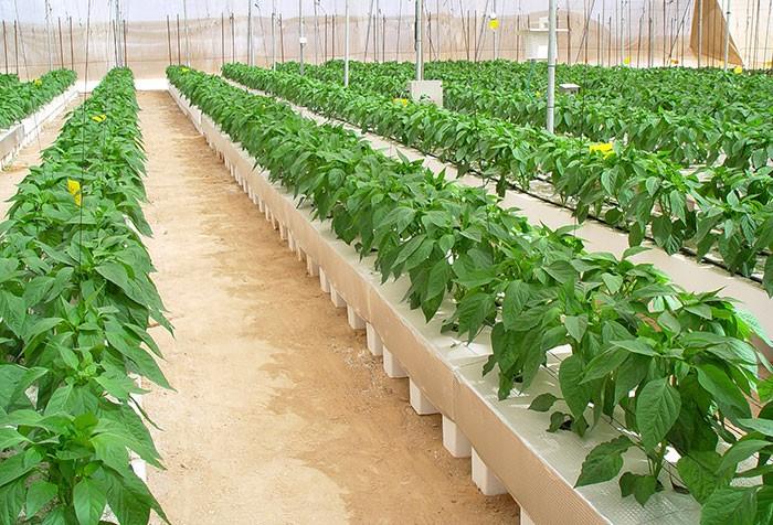 Fertilizantes para hortícolas
