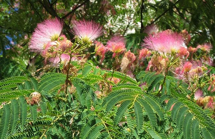 Rboles de hoja caduca revista de flores plantas for Diferencia entre arboles de hoja caduca y hoja perenne