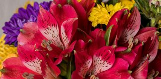 Flores de Alstroemeria aurantiaca