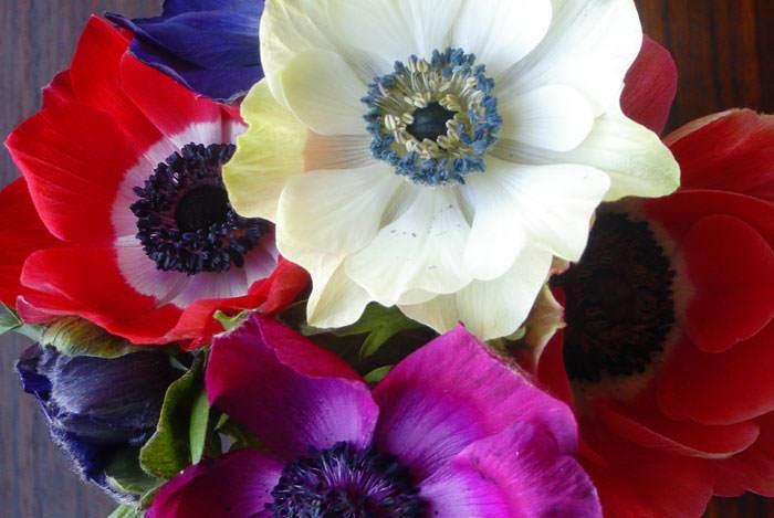 Flores de Anémonas