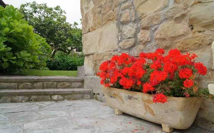 flores de geranios