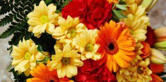 Flores de margaritas y gerberas