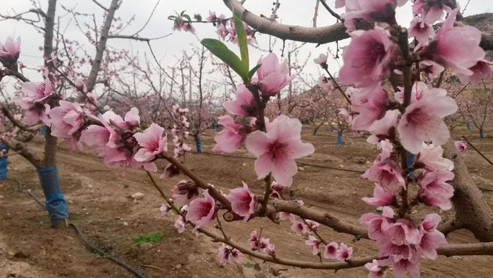 Productos para floración y cuajado de frutos