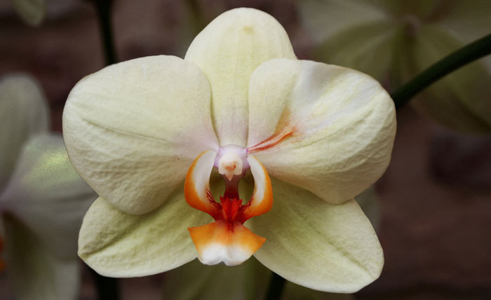Flores de orquídeas