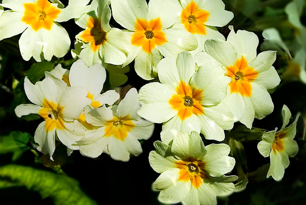 Calendario Del Jardin En Octubre Revista De Flores Plantas - Plantas-de-jardin-con-flores