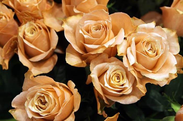 Flores de rosas