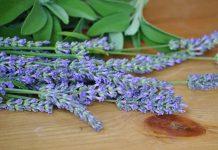 Flores de Salvia officinalis