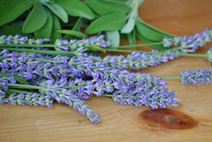 Flores de Salvia officinalis