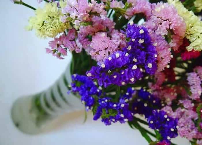 Flores de statice