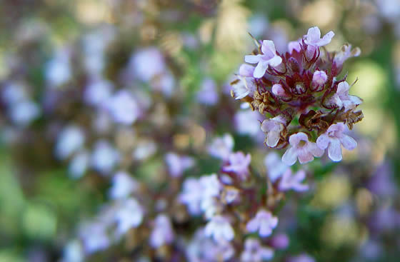 The cheflera is one of the most popular houseplants belongs to the