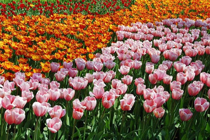 Bulbos de oto o revista de flores plantas jardiner a - Bulbos de otono ...