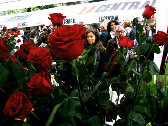 Sant Jordi, un libro y una rosa