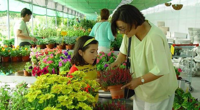 flores y plantas madrid