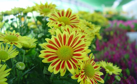 Flores y plantas en madrid for Arboles plantas y flores