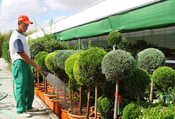 Flores y plantas en madrid - Viveros plantas madrid ...