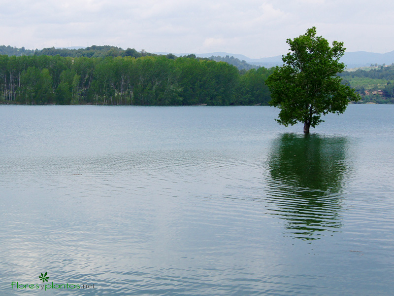 fondo-pantalla-arbol-sobre-el-lago-800-600