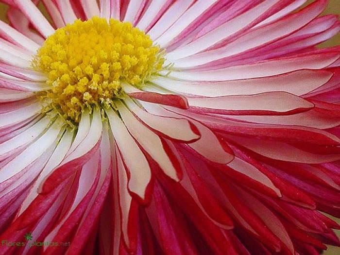fondo pantalla de flores