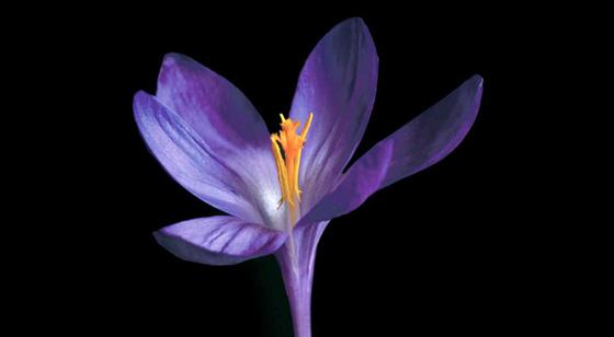 Fotografía de Edvard Koinberg en Herbarium Amoris, Floral Romance