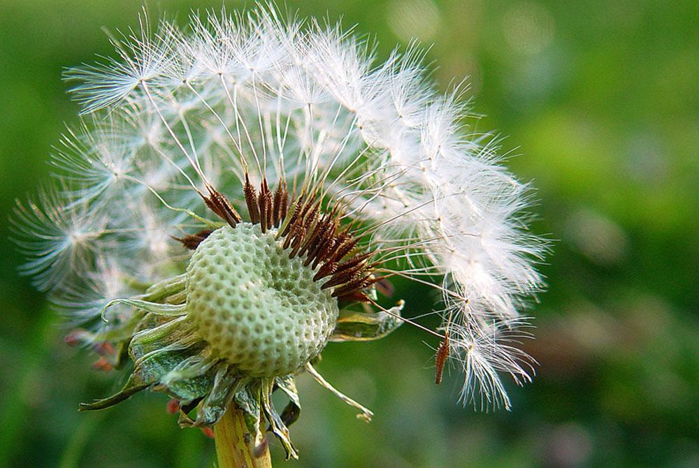 Consejos para fotografiar flores y plantas revista de for Arboles plantas y flores