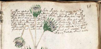 El Manuscrito Voynich y las Frankenplantas