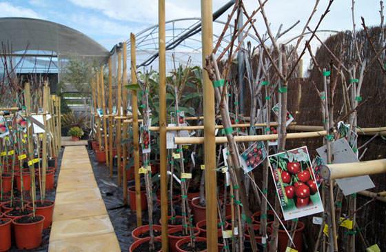 Frutales para terrazas y áticos