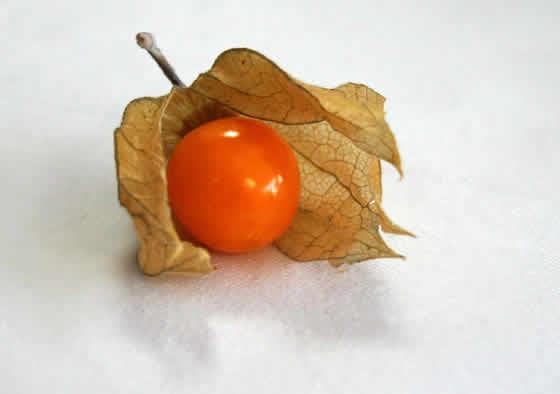 Fruto de Physalis Alquequenje