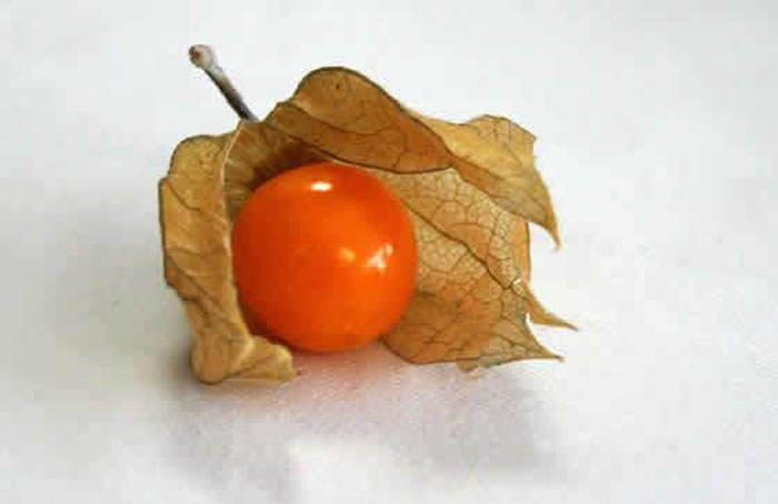 fruto physalis