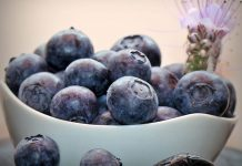 Frutos de arándano recolectados
