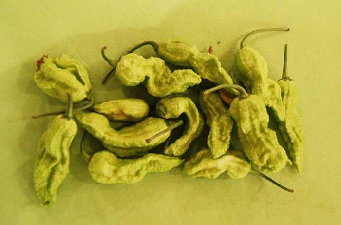 frutos de bhut jolokia