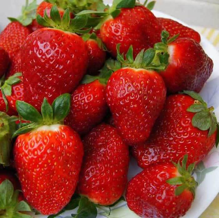 frutos de fresas