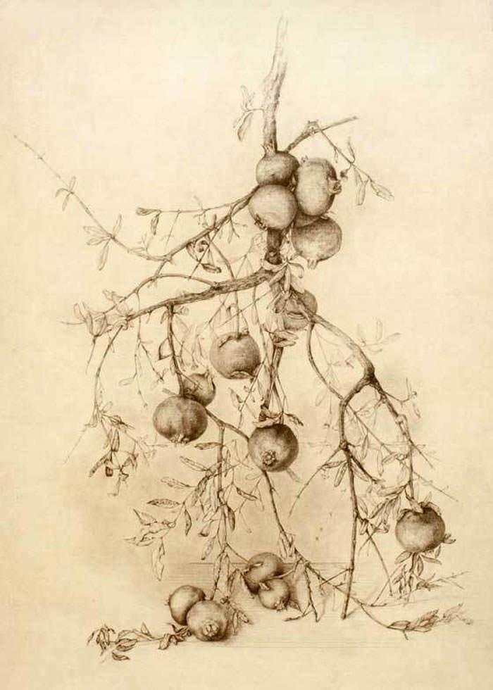 grabados de marta chirino ramas de granado