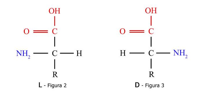Los aminoácidos y su interacción con las plantas