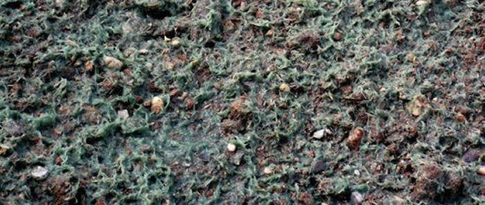 hidro mulch para hisrosiembras