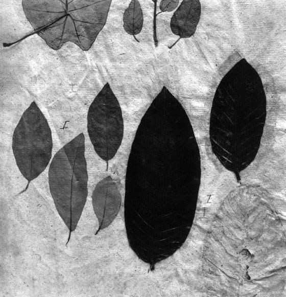 Hortus Siccus de Paul Den Hollander