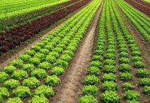 Huella isotópica en fertilizantes nitrogenados ecológicos