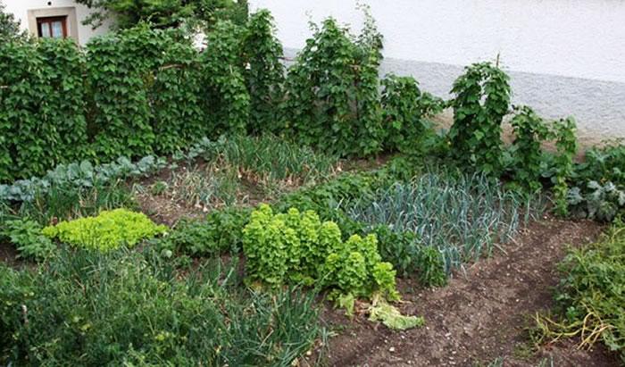 Huerto urbano for Arboles frutales para el jardin