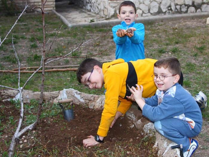 Jan, Jordi y Magí, plantando bulbos de Tulipán