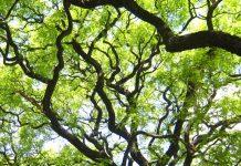 Jornadas Internacionales de Paisajismo y Arboricultura