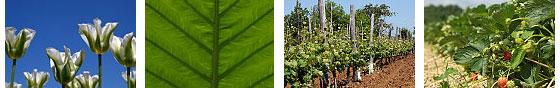 Encuentro sobre el equilibrio entre suelo y la planta