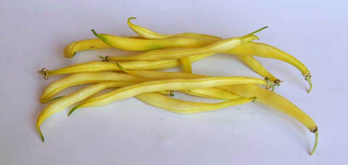 Judia amarilla