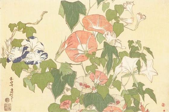 katsushita-flores