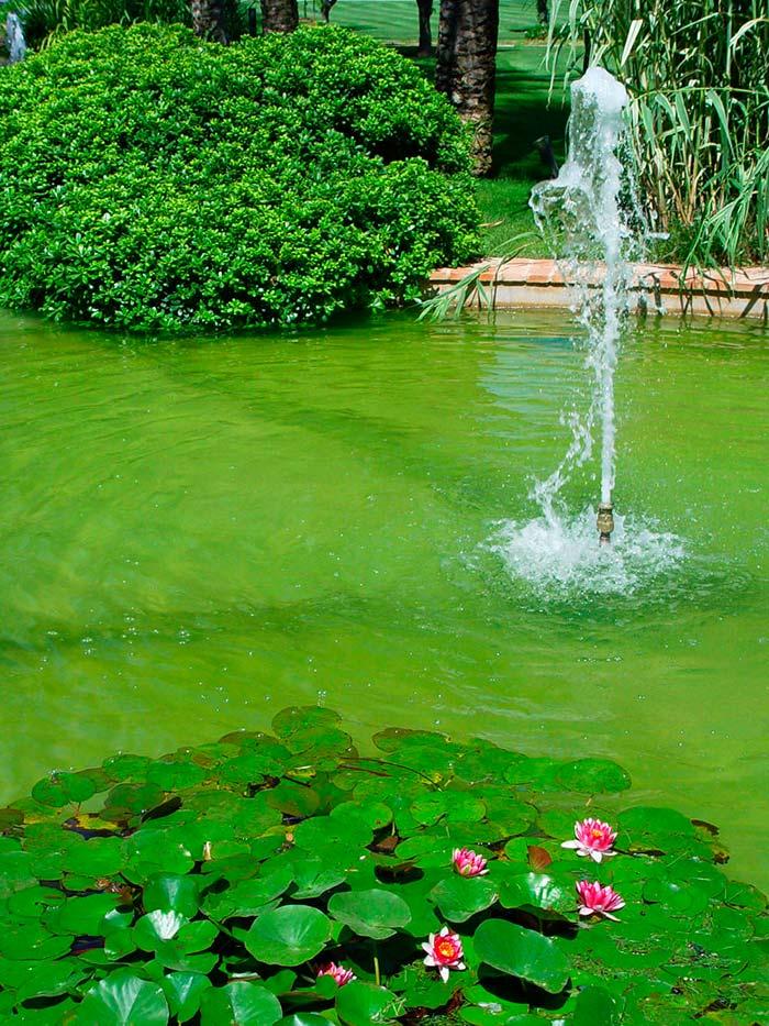 las plantas acuaticas