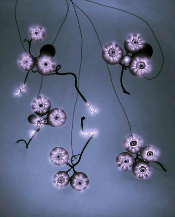Luminous Garden de Paul Den Hollander