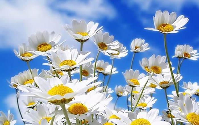 Cosas Para Photoscape Flores Y Plantas Arboles Ps: La Presencia De Las Flores En El Universo Del Amor