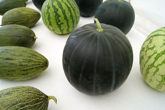elena rojas la dos melones upskirt